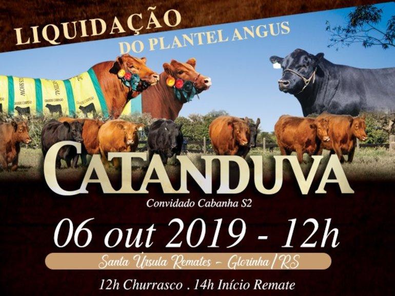 LEILÃO CATANDUVA - LIQUIDAÇÃO PLANTEL ANGUS