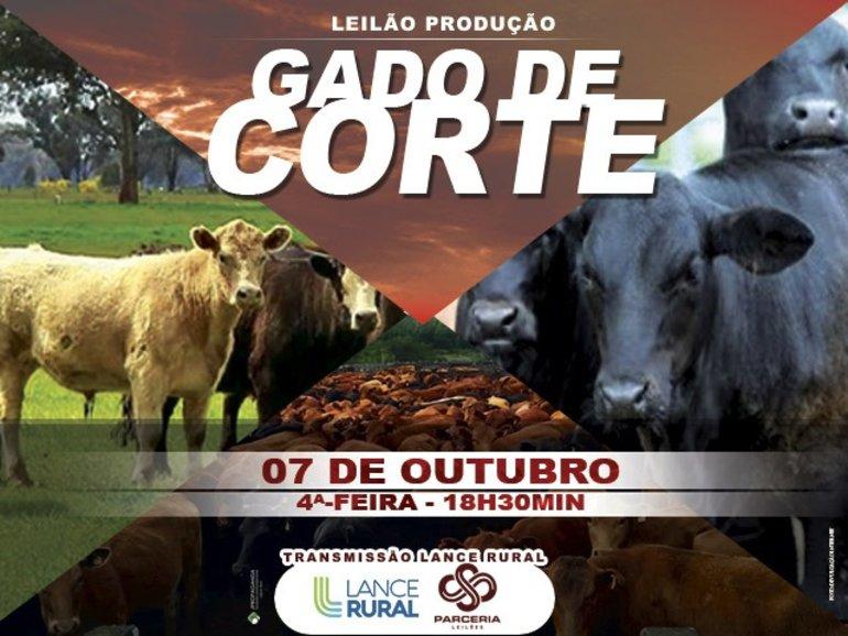 leilão produção gado de corte