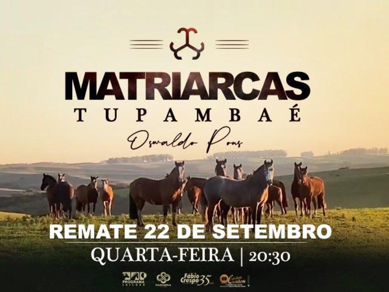 LEILÃO MATRIARCAS TUPAMBAÉ