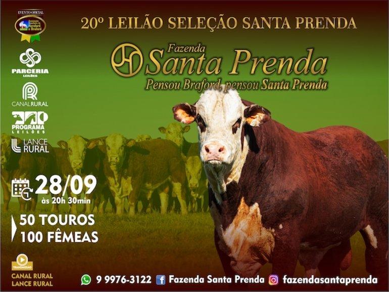 LEILÃO SANTA PRENDA - vídeos touros