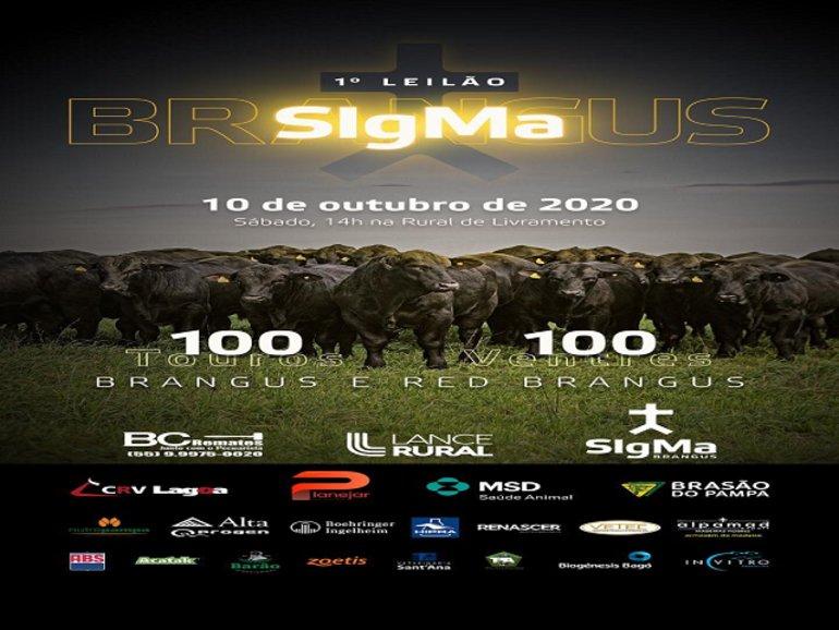 LEILÃO SIGMA BRANGUS