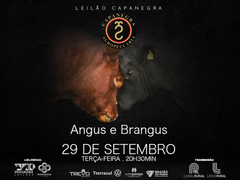 LEILÃO CAPANEGRA - VÍDEOS