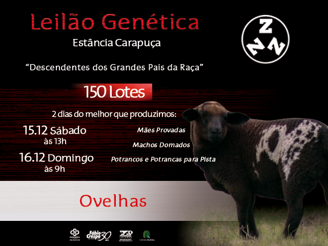 LEILÃO GENÉTICA CARAPUÇA - OVELHAS
