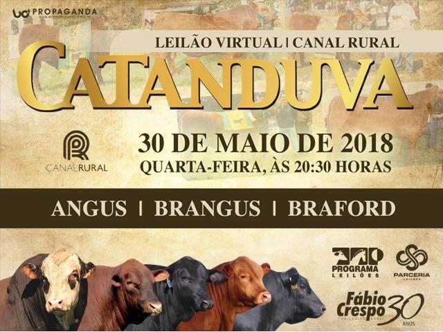 LEILÃO VIRTUAL CATANDUVA